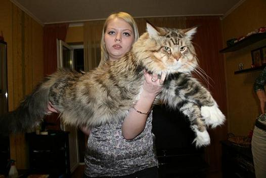 Кошка в профиль фото