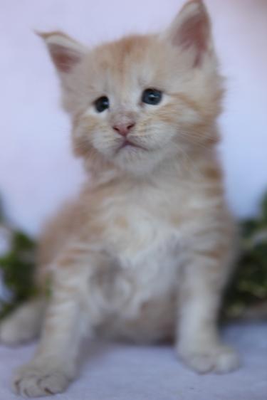 фото кот диджей