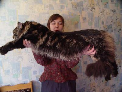 http://www.krasnyidar.ru/pic/cats/14.JPG